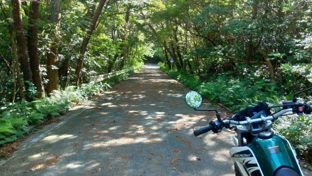 沖縄の林道