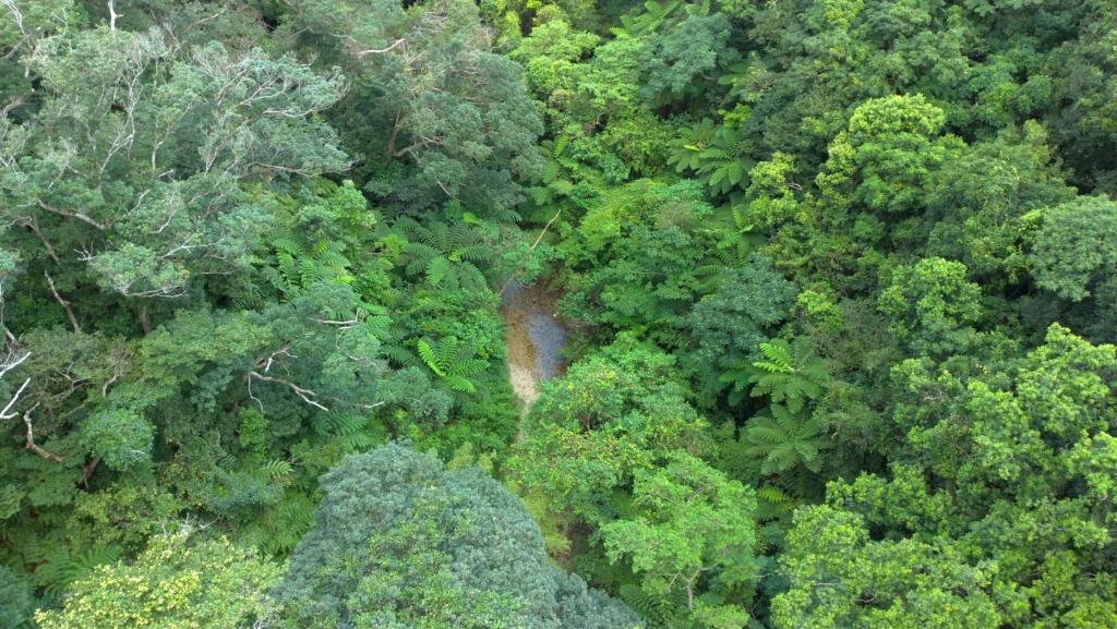 沖縄のジャングル