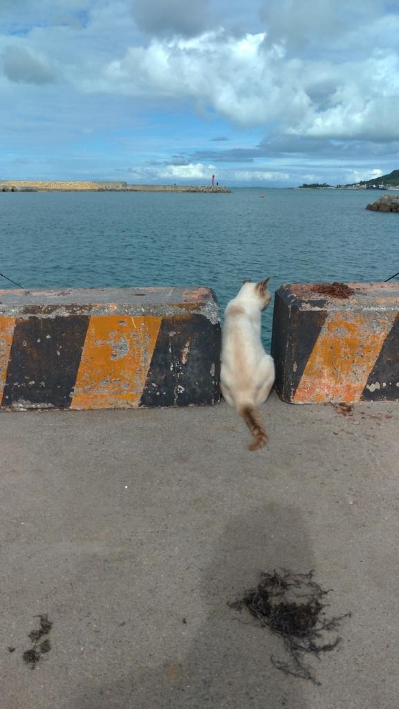 漁港 ジャストフィットな猫