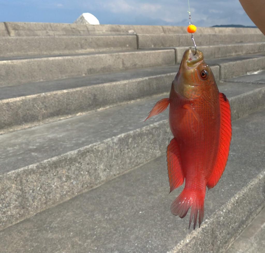 沖縄 穴釣り メギス